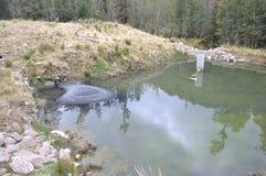 在矛河煤炭的汇集水池 免版税库存照片