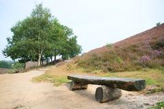 在石南花的空的长木凳在风景 免版税库存图片