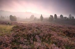 在石南花花的剧烈的有雾的日出 免版税库存图片