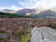 在石南花高原的大石头与更加进一步Ennerdale的森林 免版税库存照片