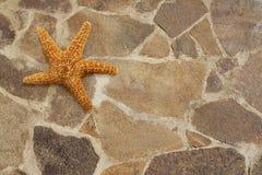 在石地板上的海星 图库摄影