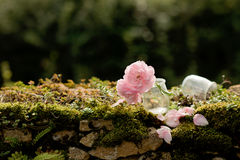 在石墙上的两朵桃红色花 库存图片