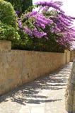 在石墙上的九重葛 图库摄影