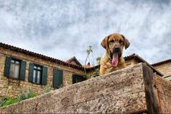 在石墙上的打呵欠的狗 库存照片
