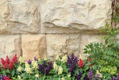 在石墙背景的Salvia 免版税库存照片