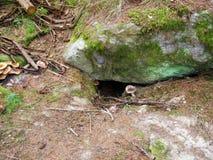 在石头下的动物孔 免版税库存图片