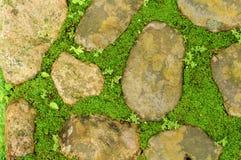 在石头之间的草 免版税库存图片