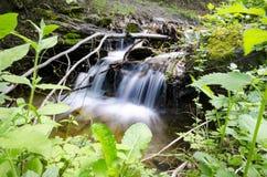 在石头和叶子灌木中的山河 免版税图库摄影