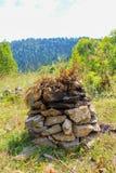 在石头岩石的杉木锥体  免版税库存图片