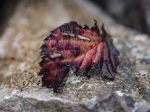 在石头的五颜六色的叶子 免版税库存照片