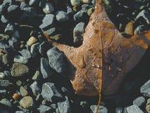 在石头的叶子 库存图片