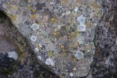 在石头的地衣 图库摄影