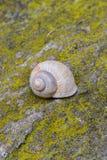 在石头的巧克力精炼机蜗牛 免版税图库摄影