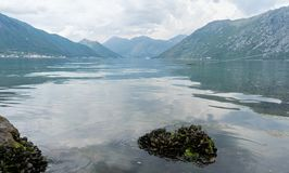 在石头的新鲜的淡菜活与浪潮在有山的一个湖在kotor海湾,黑山 与甲壳动物的风景风景 免版税库存图片