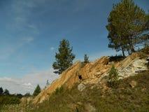 在石头的杉木 库存图片