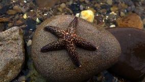 在石头的海星 免版税库存图片