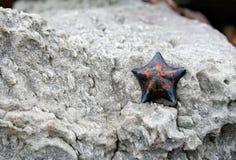 在石头的海星 免版税图库摄影