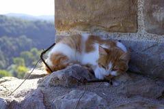 在石头的猫 免版税库存图片