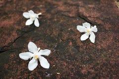 在石头的白花秋天 免版税图库摄影