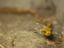 在石头的蛇 免版税库存照片