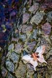 在石头的蝴蝶 库存照片