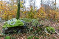 在石头的青苔在11月 免版税库存图片