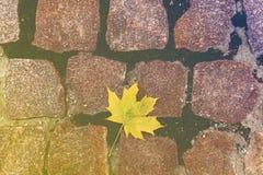 在石头的黄色叶子 库存图片