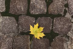 在石头的黄色叶子 免版税图库摄影