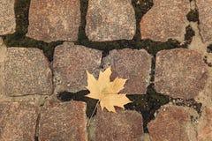 在石头的黄色叶子 库存照片