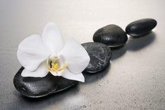 在石头表面湿白色的兰花 免版税库存照片