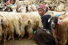 在石宅基的印地安人Changpas在长塘高原在青藏高原的区域 免版税库存照片