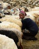 在石宅基的山羊印地安人Changpas在长塘高原在青藏高原的区域 免版税库存图片
