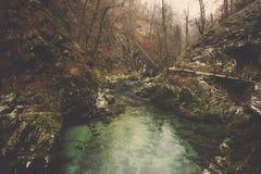 在石山麓小丘中的绿色水池在深密林 免版税库存照片