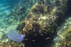在石底部的背景的水母 免版税库存照片