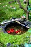 在石木盆里面的红色叶子水槽 库存照片