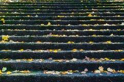 在石步的黄色秋叶在Dandenong排列,澳大利亚 免版税库存图片