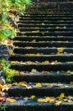 在石步的黄色秋叶在Dandenong排列,澳大利亚 库存图片