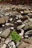 在石河床,兴旺绿色植物 免版税库存照片