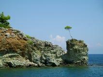 在石海角的孤立杉木 库存照片
