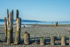 在石海滩的老打桩 免版税库存照片