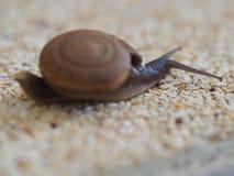 在石渣地面的蜗牛 库存照片