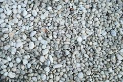 在石渣的一些干燥叶子 库存照片