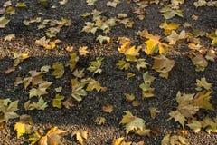 在石渣路下落的黄色秋叶 免版税库存图片