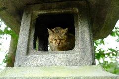 在石灯笼的睡觉猫 免版税库存图片