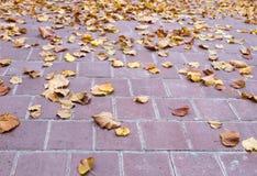 在石瓦片的黄色叶子 免版税库存照片
