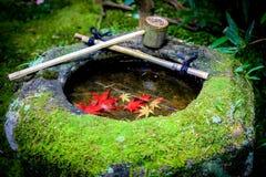 在石碗里面的红色叶子水槽 库存图片