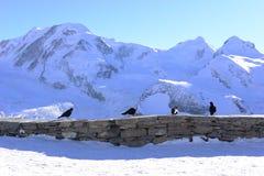 在石篱芭的四只黑乌鸦 免版税库存照片