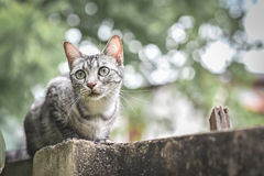 在石篱芭的猫在庭院和树 看下来在庭院 免版税库存照片
