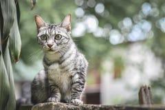 在石篱芭的猫在庭院和树 看下来在庭院 库存图片