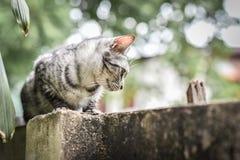 在石篱芭的猫在庭院和树 看下来在庭院 免版税图库摄影
